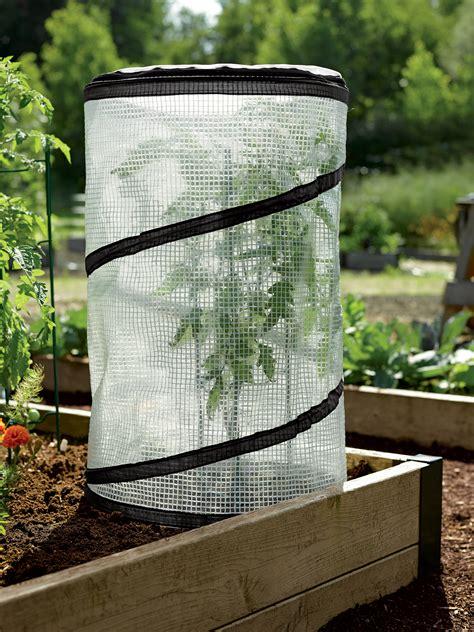 pop  tomato accelerator cloche mini growhouse