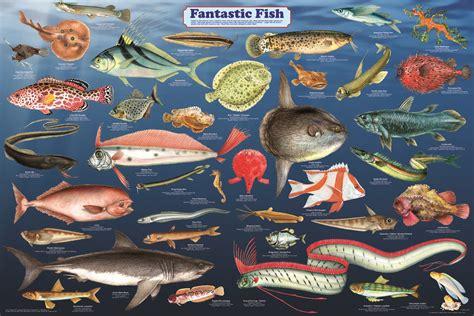 printable fish poster feenixx publishing educational and hobby posters