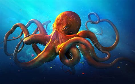 colorful octopus wallpaper octopus wallpaper creative hd wallpapers animal images