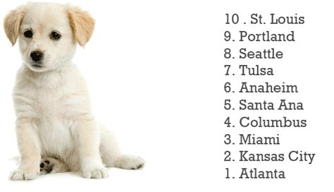 cool puppy names boy names 3 cool hd wallpaper funnypicture org