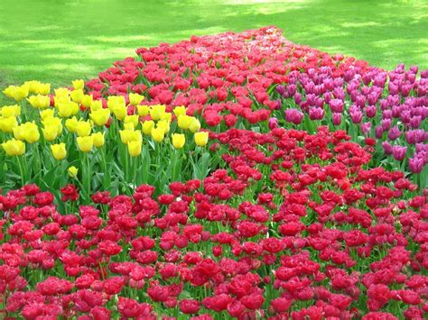 flowers in the garden of guest post bulb flower gardens grower direct fresh cut