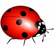 Lady Bug  Free Download Clip Art On
