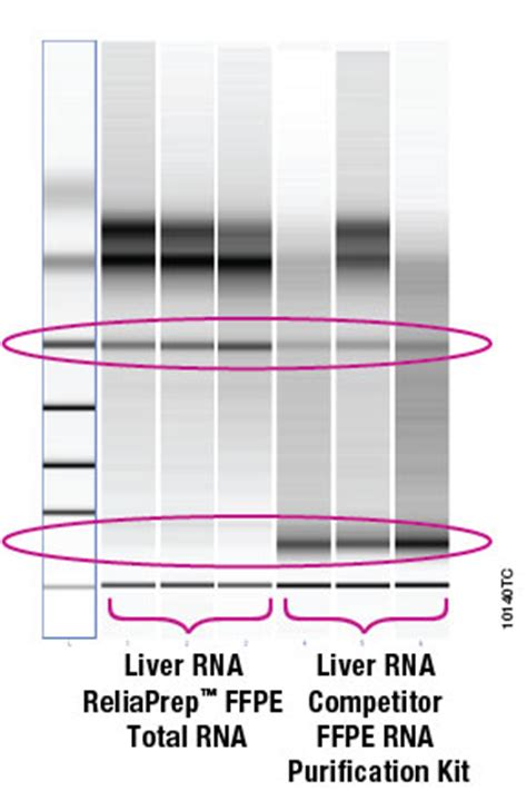 ffpe sections reliaprep ffpe total rna miniprep system