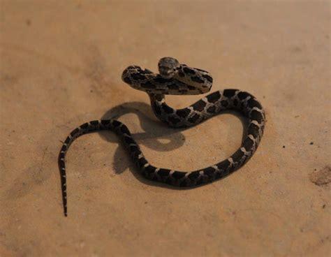 basement snake