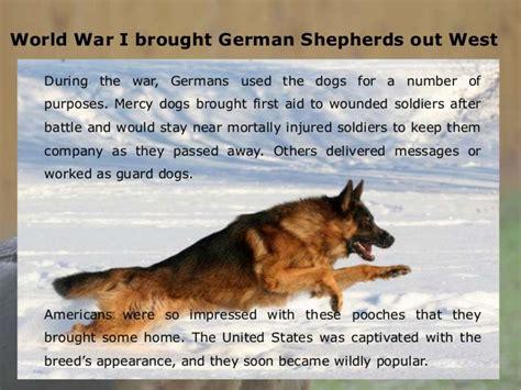 german shepherd facts big german shepherds noble facts