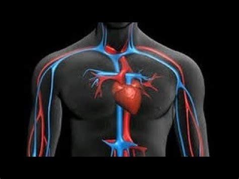 imagenes educativas del cuerpo humano el sistema circulatorio humano cienciaseducativas s a