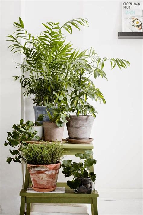 best 25 indoor plant stands ideas only on