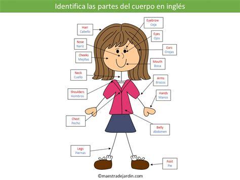imagenes en ingles de las partes del cuerpo aprender a identificar las partes del cuerpo en ingl 233 s