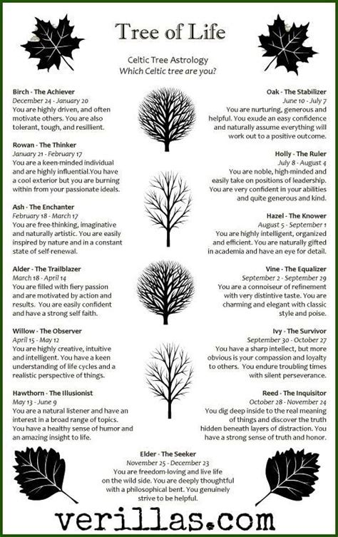 what do trees represent best 25 tree of life meaning ideas on pinterest tree of