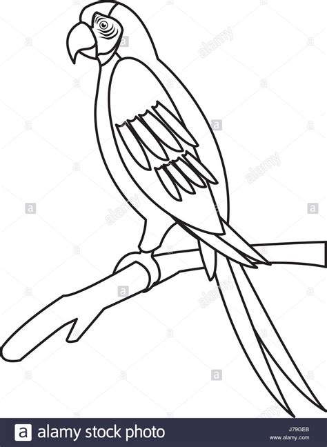 majestic parrot outline how to draw a central drawing