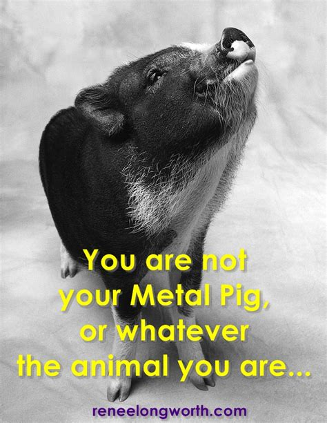 why you shouldn t freak out because you re a metal pig or