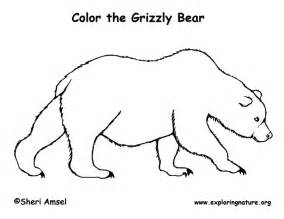 bears of color grizzly coloring page