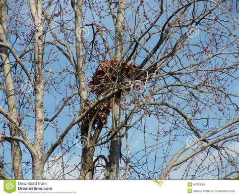 Tiere Im Winter Eichh Rnchen 4539 by Eichh 246 Rnchen Nest Stockfoto Bild 54363068