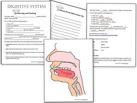 Human Anatomy Worksheets by Human System And Circulatory System