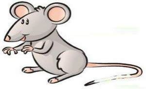 new year 2016 the rat new year horoscope rat 2016 the best rat of 2018