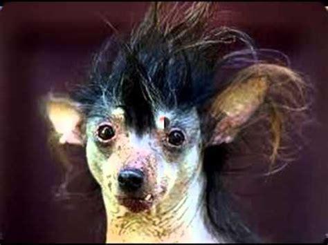 imagenes de animales feos y chistosos los perros y gatos mas feos del mundo youtube