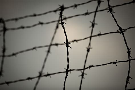 photo wire barbed wire free stock photo domain pictures