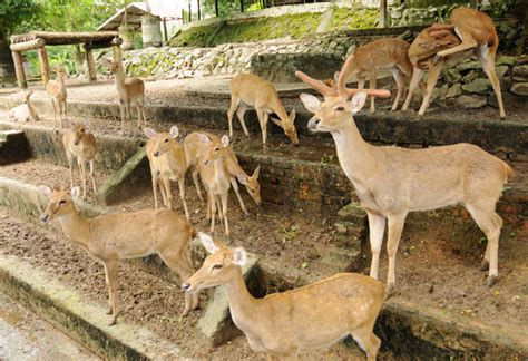 Zoological Garden by Yangon Zoological Gardens