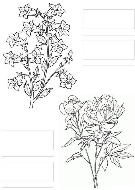 copic coloring sketch coloring page