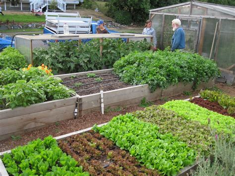 Vegetable Garden Ideas For Small Yards Small Backyard Vegetable Garden Ideas Mystical Designs And Tags