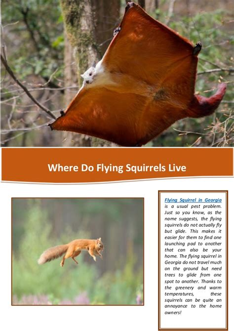 where do flying squirrels live