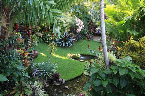 tropical backyard gardens dennis hundscheidt s garden in sunnybank brisbane great