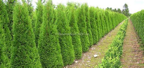 wann thuja pflanzen wann pflanzen der beste pflanzzeitpunkt f 252 r heckenpflanzen