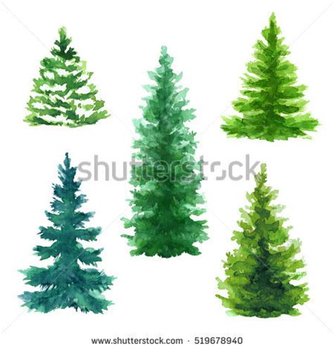 Evergreen Tree Clip by Evergreen Tree Stock Images Royalty Free Images Vectors