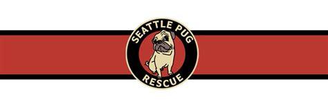 seattle pug rescue seattle pug rescue seattlepugs