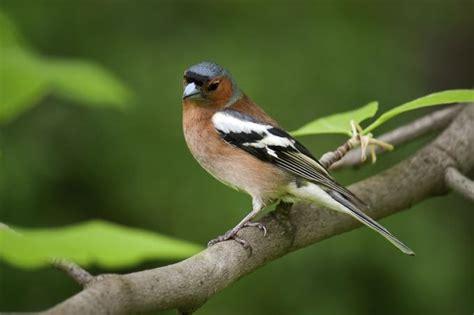 vögel im garten bestimmen vogel im garten bestimmen das beste aus wohndesign und