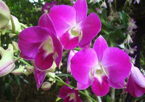 bunga anggrek  manfaatnya  tentang bunga