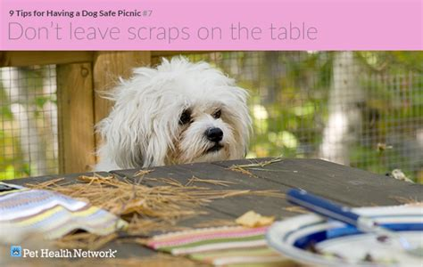 what happens to a who eats table scraps dogs and picnic dangers breeds picture