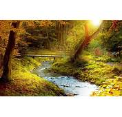 Forest Stream Pictures  HD Desktop Wallpapers 4k