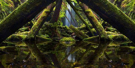 wallpaper hutan hujan hijau hd  gratis wallpaperbetter