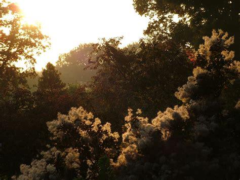 backyard sunset autumn 04