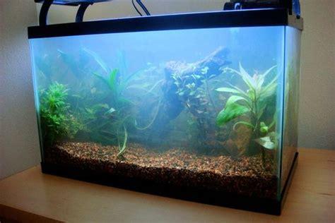 aquarium fish tanks and water on pinterest