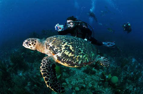 Best Diving In The Caribbean by 10 Best Scuba Diving In The Caribbean Fodors
