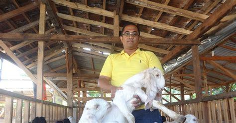 Jual Bibit Kambing Tangerang pusat kambing etawa surabaya