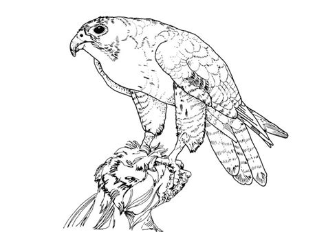 coloring pages birds of prey birds of prey coloring pages bestofcoloring com