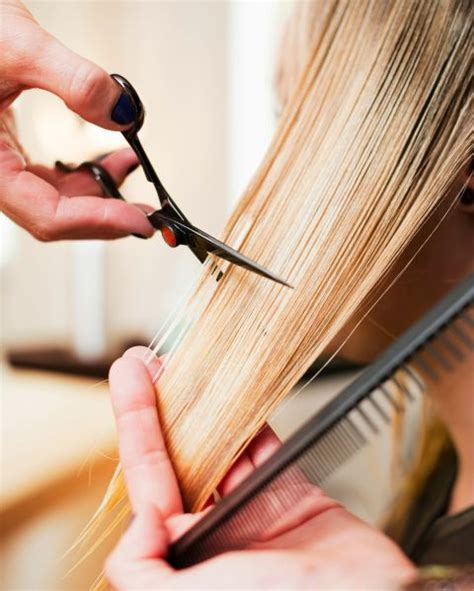 how do i cut the hair of a soft coated wheaton terrier 9 common hair care myths hair care tips