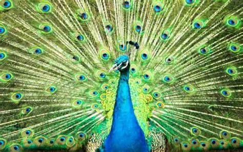 film dokumenter flora dan fauna menilik kekayaan flora dan fauna indonesia