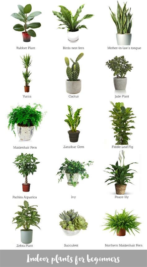 Houseplants That Don T Need Light best 10 indoor plant decor ideas on pinterest plant
