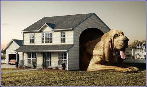 large houses for great danes large houses for great danes pet photos gallery n72aqon2z5