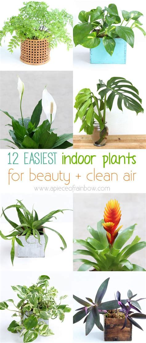 fresh beautiful indoor plant ideas for eco friendly 23201 406 best images about eco friendly ideas for the home on