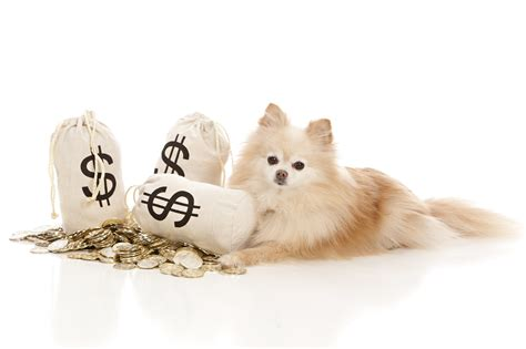 dogs in care save money on pet care