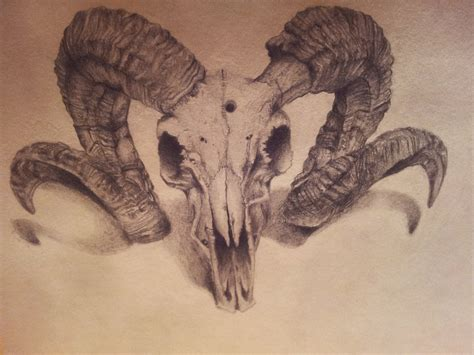 rams skull drawing ram skull by backhendl on deviantart