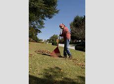 Rake Woman | Free Stock Photo | A woman raking leaves on ... Clip Art Pics Of The Sun