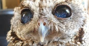 Have you heard about the starry eyed blind owl this is for real