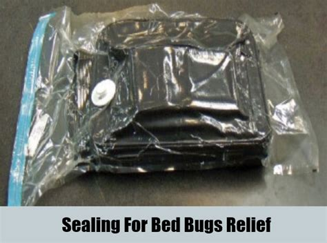 Hair Dryer Cure For Cold 8 home remedies for bed bugs treatments cure