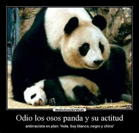 imagenes con frases de amor de osos imagenes de osos pandas con frases de amor imagui